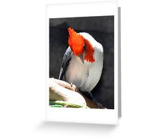 Red Crested Cardinal Greeting Card