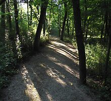 Woodland Path at Big Darby by Timothy Eric Hites
