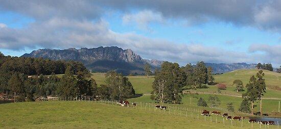 Mt Roland - viewed from near Staverton by gaylene