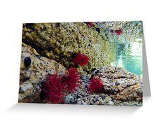 Anemones Greeting Card