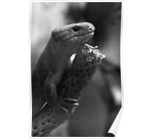 Just A Skink Poster