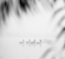 birds in fog by houenying