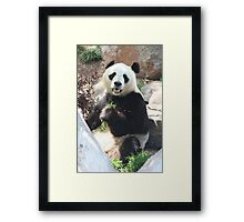 Let's Catch Up After Lunch  Framed Print