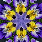 Pansies Fractal by Tori Snow