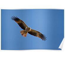 a flying whistling kite Poster