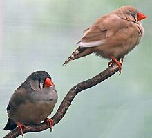 Two Birds On A Branch by DMBell