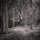 Dark Woods by Maybrick
