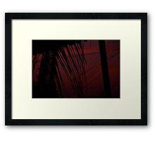 A Palms View Framed Print