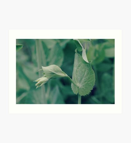 the sweetest of peas...4~ Art Print