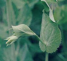 the sweetest of peas...4~ by Brandi Burdick