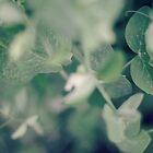 the sweetest of peas...5~ by Brandi Burdick
