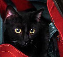 Cat In The Bag by heatherfriedman