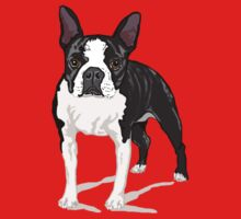 Boston Terrier by rlnielsen4