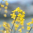 Summer Flowers by cj1970