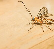 Giant Mosquito/Bug by StudlyMuffin