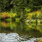 Autumn Reflections by Diane Schuster