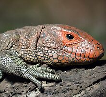 Lounge Lizzard by DavidWHughes