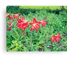 Flower in The Green - Nature Photography Canvas Print