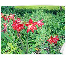 Flower in The Green - Nature Photography Poster