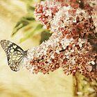 Sweet Lilacs by Lois  Bryan