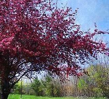 Blossoming Cherry Tree by vigor