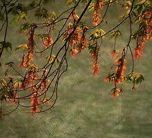 The Maple Tree by vigor