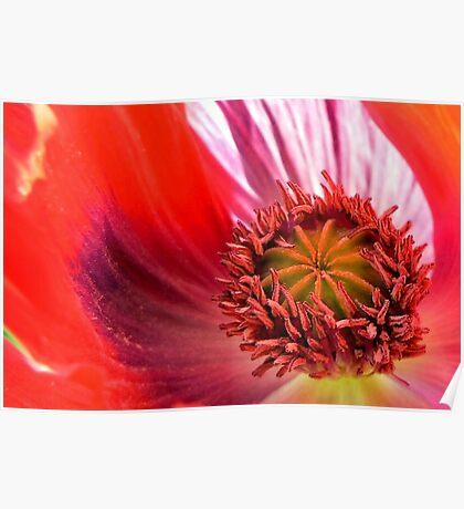 Poppy In Memoriam Poster