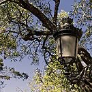 Lamp Post At Paseo Del Morro - San Juan © by © Hany G. Jadaa © Prince John Photography