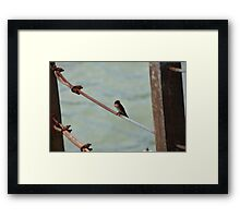 Little Bird on Metal Wire Framed Print