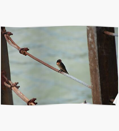 Little Bird on Metal Wire Poster