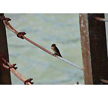 Little Bird on Metal Wire Photographic Print