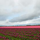 Skagit Valley Tulip Festival by Julie Van Tosh Photography