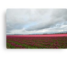 Skagit Valley Tulip Festival Canvas Print