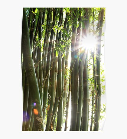bamboo bright Poster