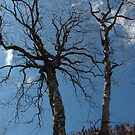 Birch Trees waiting for Spring by cuilcreations