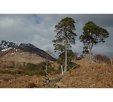 Scots Pines above Kinlochleven Photographic Print