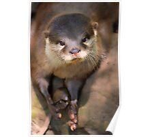Cross Eyed Otter Poster