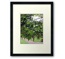 White Birch Tree Catkins Framed Print