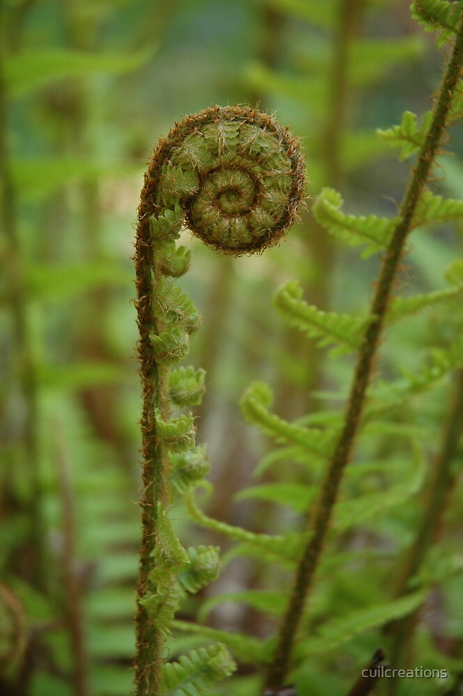 Fern Unfurling by cuilcreations