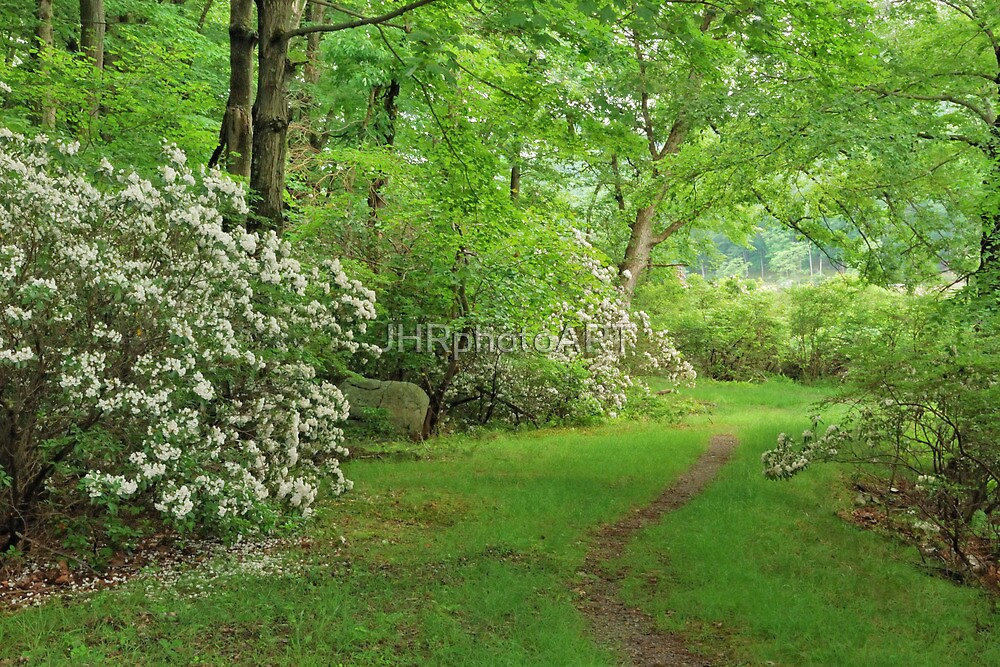 Mountain Laurel - Harriman Park by JHRphotoART