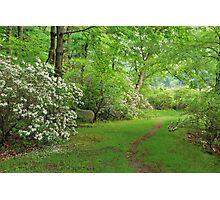 Mountain Laurel - Harriman Park Photographic Print