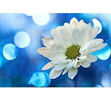 Celebrating Blue & White Photographic Print