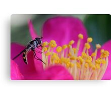 Hoverfly (2) Canvas Print