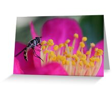 Hoverfly (2) Greeting Card