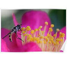 Hoverfly (2) Poster
