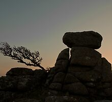 Dartmoor Tor and Tree by peteton