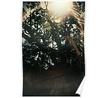 Leaf of Heart - Lomo  Poster