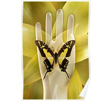 Butterfly_Thyiades_thyastes Poster