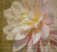 Yellow and Pink Dahlia on Parchment by Kerry McQuaid