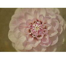 Dahlia on Parchment Photographic Print
